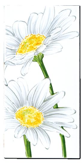 Carrelage D Coration Flore Marguerite Motif